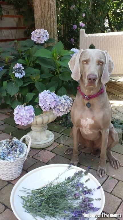 Jil- die Blumenfee
