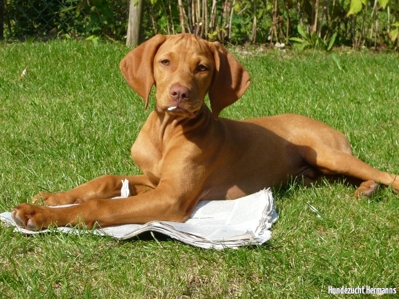 Balu - der zeitungslesende Hund