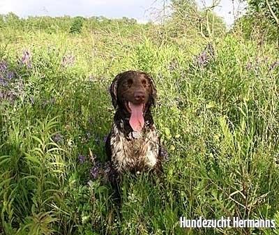 Pitschnasser, glücklicher Hund