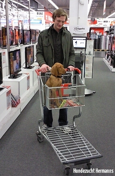 Pepe - Kleiner Hund in großer Welt