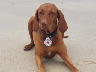 Beauty-Bella-bestandene Rettungshundeprüfung