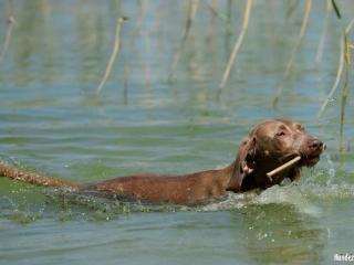 Nele-hat Freischwimmer