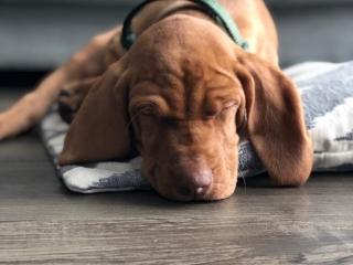 Quentin - der Büroschlaf ist der gesündeste