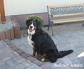 Der lachende Hund!