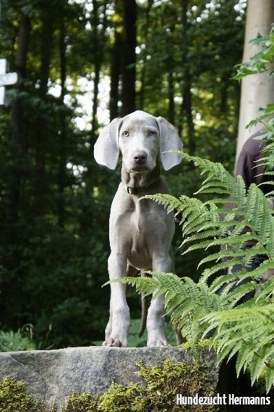 Lena - die Waldfee